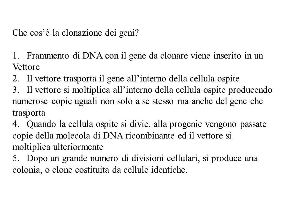 Che cos'è la clonazione dei geni? 1.Frammento di DNA con il gene da clonare viene inserito in un Vettore 2.Il vettore trasporta il gene all'interno de
