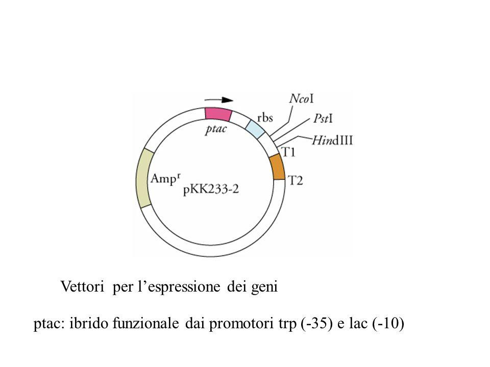 Vettori per l'espressione dei geni ptac: ibrido funzionale dai promotori trp (-35) e lac (-10)