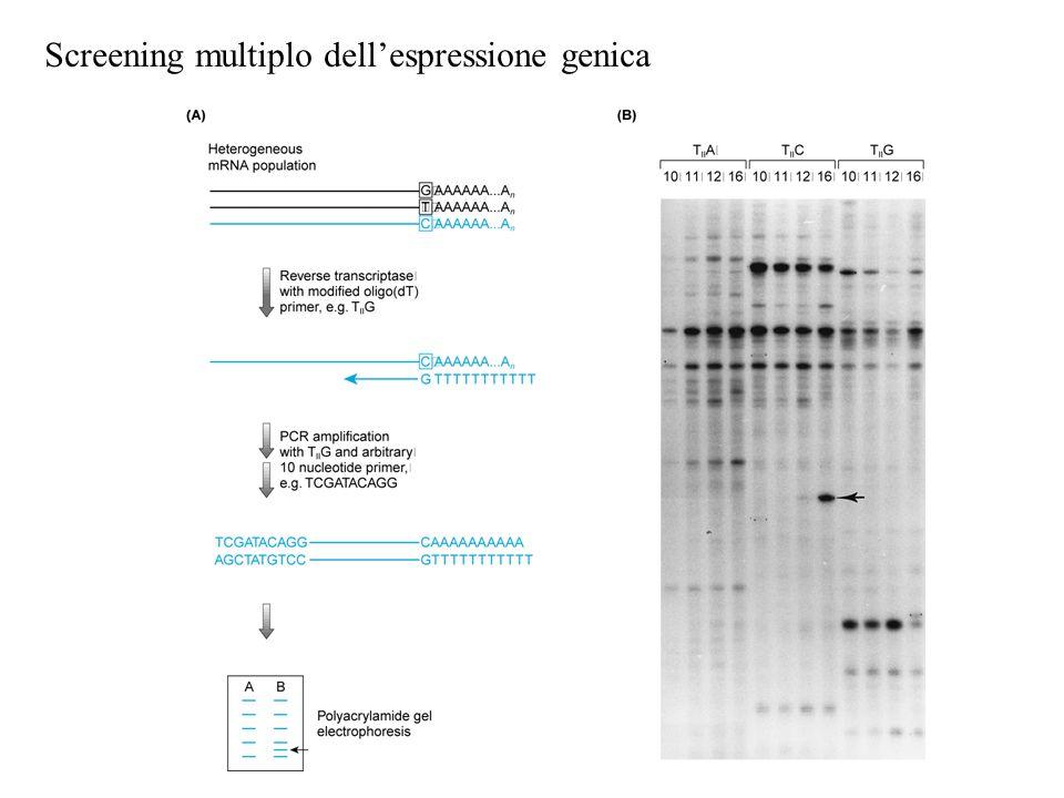 Screening multiplo dell'espressione genica