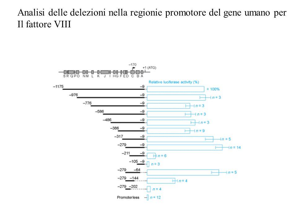 Analisi delle delezioni nella regionie promotore del gene umano per Il fattore VIII