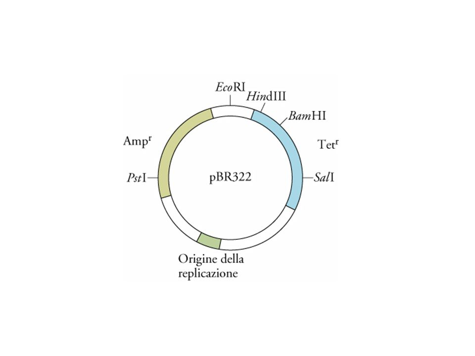 Metodo per ottenere sequenze di cDNA a lunghezza completa
