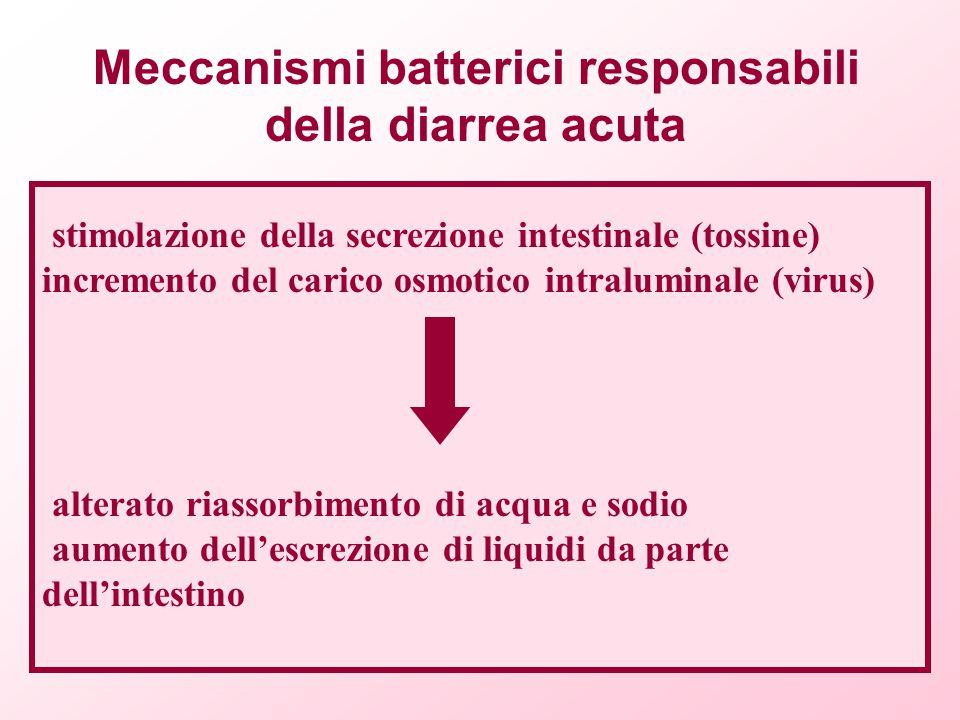 stimolazione della secrezione intestinale (tossine) incremento del carico osmotico intraluminale (virus) alterato riassorbimento di acqua e sodio aume