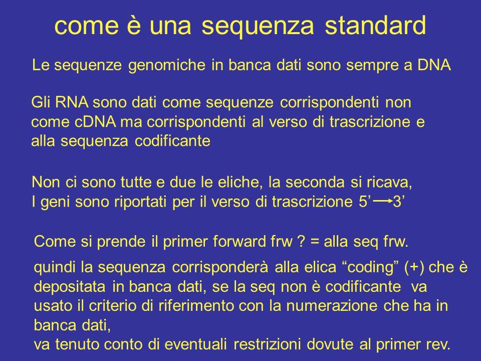 come è una sequenza standard Le sequenze genomiche in banca dati sono sempre a DNA Gli RNA sono dati come sequenze corrispondenti non come cDNA ma corrispondenti al verso di trascrizione e alla sequenza codificante Non ci sono tutte e due le eliche, la seconda si ricava, I geni sono riportati per il verso di trascrizione 5' 3' Come si prende il primer forward frw .