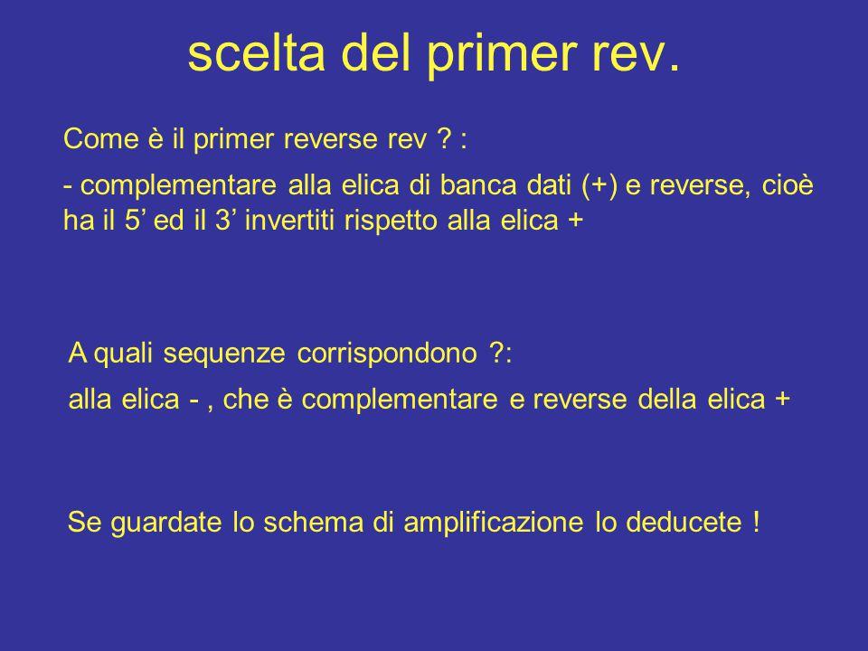 scelta del primer rev. Come è il primer reverse rev ? : - complementare alla elica di banca dati (+) e reverse, cioè ha il 5' ed il 3' invertiti rispe