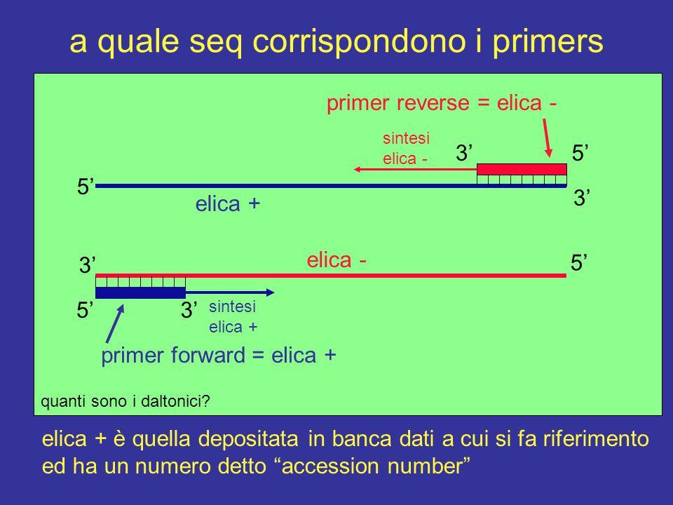 a quale seq corrispondono i primers 5' 3' 5'3' sintesi elica - 3' sintesi elica + 5'3' 5' elica - elica + quanti sono i daltonici.