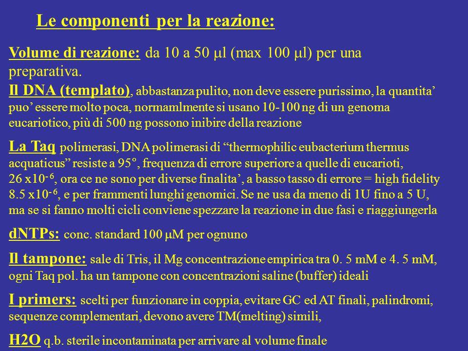Volume di reazione: da 10 a 50  l (max 100  l) per una preparativa. Il DNA (templato), abbastanza pulito, non deve essere purissimo, la quantita' pu