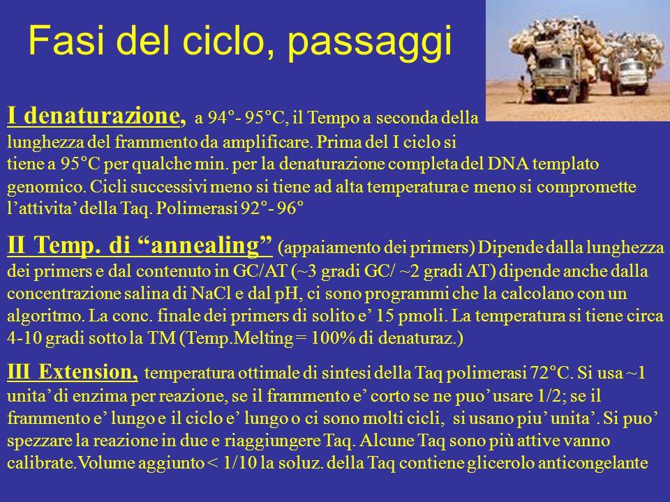 I denaturazione, a 94°- 95°C, il Tempo a seconda della lunghezza del frammento da amplificare. Prima del I ciclo si tiene a 95°C per qualche min. per