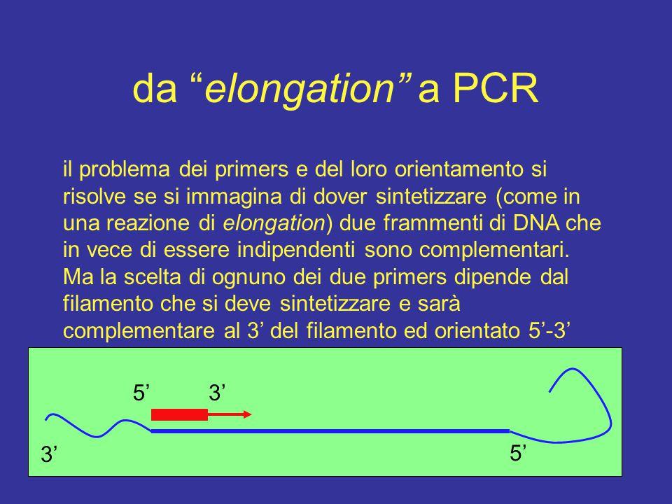 da elongation a PCR il problema dei primers e del loro orientamento si risolve se si immagina di dover sintetizzare (come in una reazione di elongation) due frammenti di DNA che in vece di essere indipendenti sono complementari.