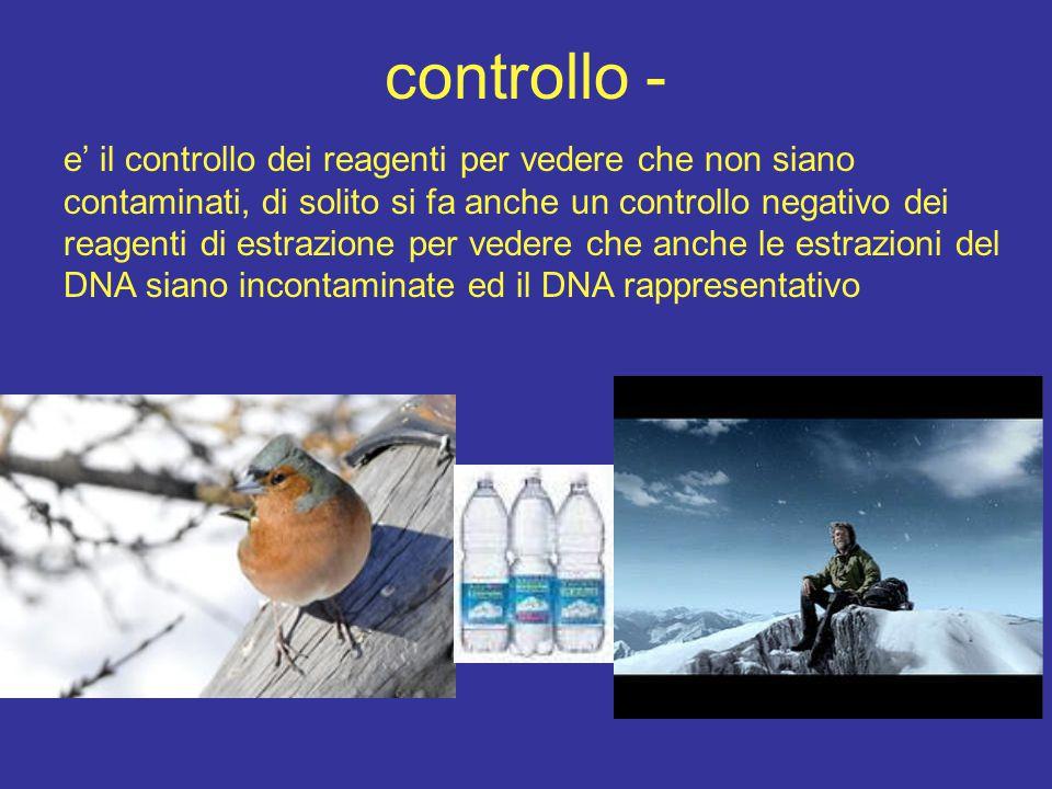 controllo - e' il controllo dei reagenti per vedere che non siano contaminati, di solito si fa anche un controllo negativo dei reagenti di estrazione