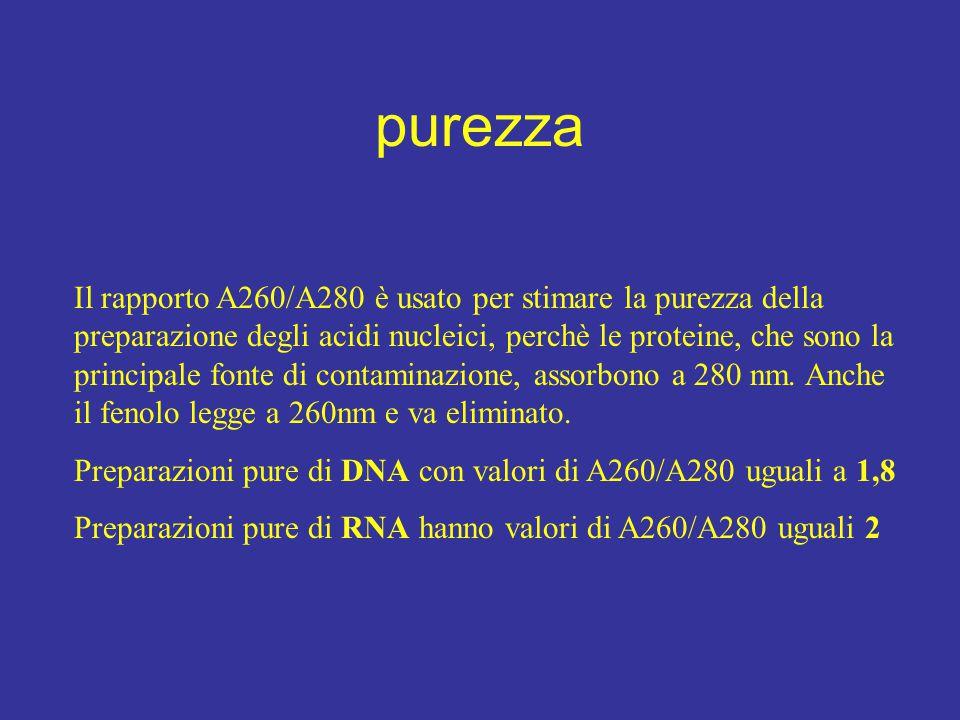 Il rapporto A260/A280 è usato per stimare la purezza della preparazione degli acidi nucleici, perchè le proteine, che sono la principale fonte di cont