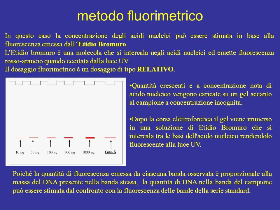 In questo caso la concentrazione degli acidi nucleici può essere stimata in base alla fluorescenza emessa dall' Etidio Bromuro. L'Etidio bromuro è una