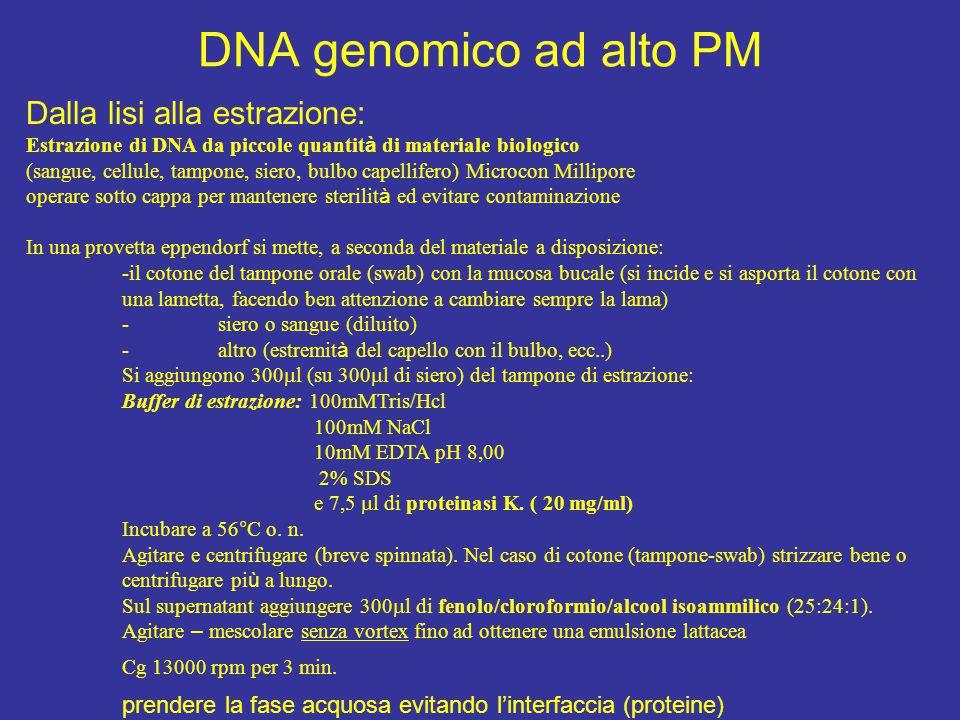 DNA genomico ad alto PM Dalla lisi alla estrazione: Estrazione di DNA da piccole quantit à di materiale biologico (sangue, cellule, tampone, siero, bu