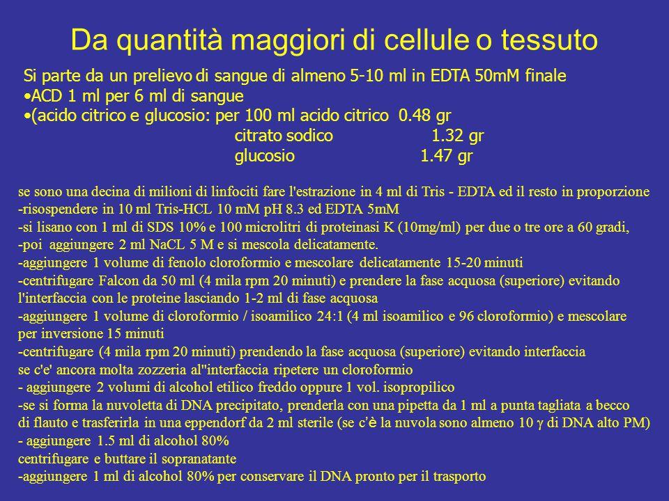 Da quantità maggiori di cellule o tessuto Si parte da un prelievo di sangue di almeno 5-10 ml in EDTA 50mM finale ACD 1 ml per 6 ml di sangue (acido c