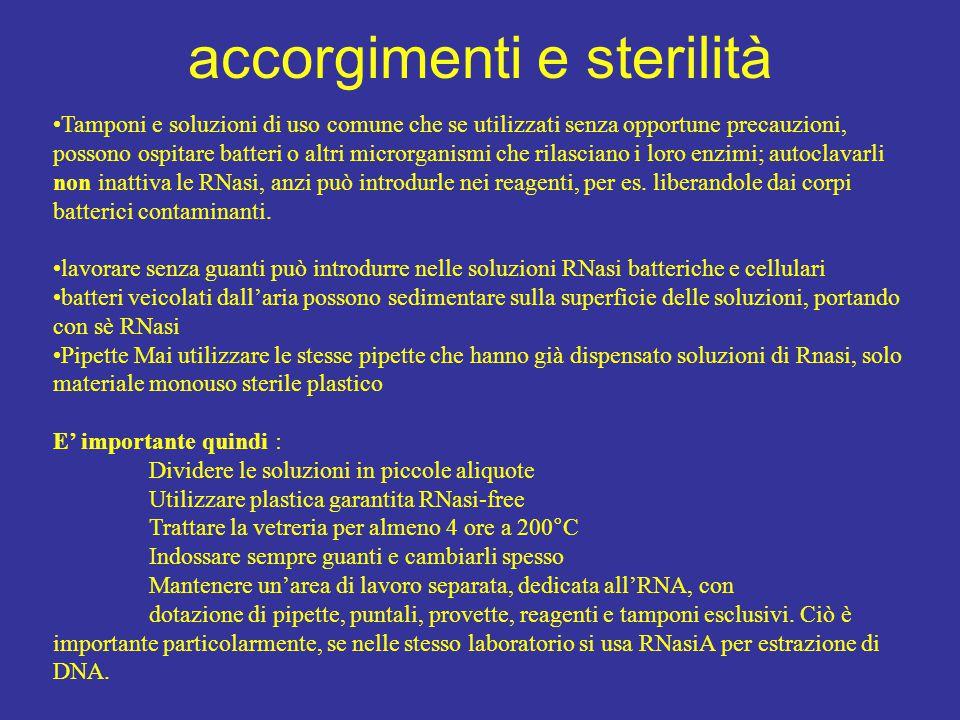 accorgimenti e sterilità Tamponi e soluzioni di uso comune che se utilizzati senza opportune precauzioni, possono ospitare batteri o altri microrganis