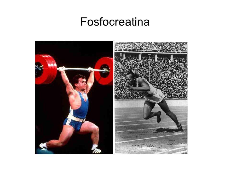 Fosfocreatina