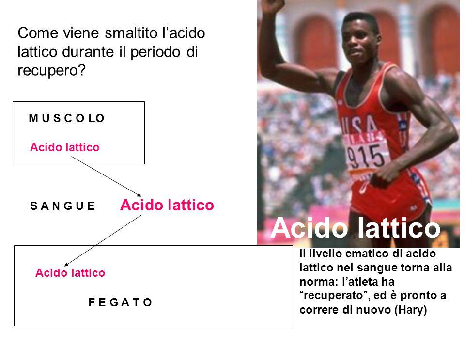 Acido lattico Come viene smaltito l'acido lattico durante il periodo di recupero? Il livello ematico di acido lattico nel sangue torna alla norma: l'a