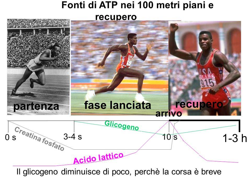 Il glicogeno diminuisce di poco, perchè la corsa è breve 1-3 h 0 s 10 s 3-4 s Creatina fosfato Glicogeno Acido lattico Fonti di ATP nei 100 metri pian