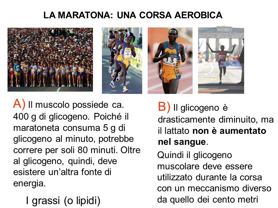 LA MARATONA: UNA CORSA AEROBICA Partenza Arrivo A) Il muscolo possiede ca. 400 g di glicogeno. Poiché il maratoneta consuma 5 g di glicogeno al minuto