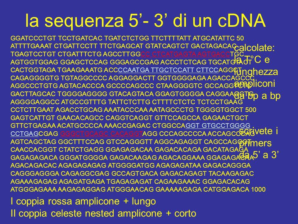 la sequenza 5'- 3' di un cDNA GGATCCCTGT TCCTGATCAC TGATCTCTGG TTCTTTTATT ATGCATATTC 50 ATTTTGAAAT CTGATTCCTT TTCTGAGCAT GTATCAGTCT GACTAGACAC TGAGTCCTGT CTGATTTCTG AGCCTTGGCC CTCATGAGTA AGTGACCTGC AGTGGTGGAG GGAGCTCCAG GGGAGCCGAG ACCCTCTCAG TGCATGTACT CACTGGTAGA TGAAGAAATG ACCCCAATGA TTGCTCCATT CTTCCAGGCT CAGAGGGGTG TGTAGGCCCC AGGAGGACTT GGTGGGGAGA AGACCAGCCC AGGCCCTGTG AGTACACCCA GCCCCAGCCC CTAAGGGGTC GCCAGGTCTC GACTTAGCAC TGGGGAGGGG GTACAGTACA GGAGTGGGGA CAGGAAGGTG AGGGGAGGCC ATGCCGTTTG TATTCTCTTG CTTTTCTCTC TCTCCTGAAG CCTCTTGAAT AGACCTGCAG AAATACCCAA AATAGCCCTG TGGGGTGGCT 500 GAGTCATTGT GAACACAGCC CAGGTCAGGT GTTCCAGCCA GAGAACTGCT GTTCTGAGAA ACATGCCCCA AAACCGAGAC CTGGCCAGGT GTGCCTGGGG CCTGAGCGAG GGGCTGCAGC CACAGGTAGG CCCAGCCCCA ACCAGCCCAG AGTCAGCTAG GGCTTTCCAG GTCCAGGGTT AGGCAGAGGT CAGCCAGGGT CAACCACGGT CTATCTGAGG GGAGAGACAA GAGACACAGA GACATAGAGA GAGAGAGACA GGGATGGGGA GAGACAAGAG AGACAGGAAA GGAGAGACAA AGACAGACAC AGAGAGAGAG ATGGGGATGG AGAGAGATAA GAGACAGGGA CAGGGAGGGA CAGAGGCGAG GCCAGTGACA GAGACAGAGT TACAAGAGAC AGAAAGAGAG AGAGATGAGA TGAGAGAGAT CAGAAGAAAC GGAGACACAG ATGGGAGAAA AAGAGAGGAG ATGGGAACAG GAAAAAGAGA CATGGAGACA 1000 I coppia rossa amplicone + lungo II coppia celeste nested amplicone + corto calcolate: la T°C e lunghezza ampliconi da bp a bp scrivete i primers da 5' a 3'
