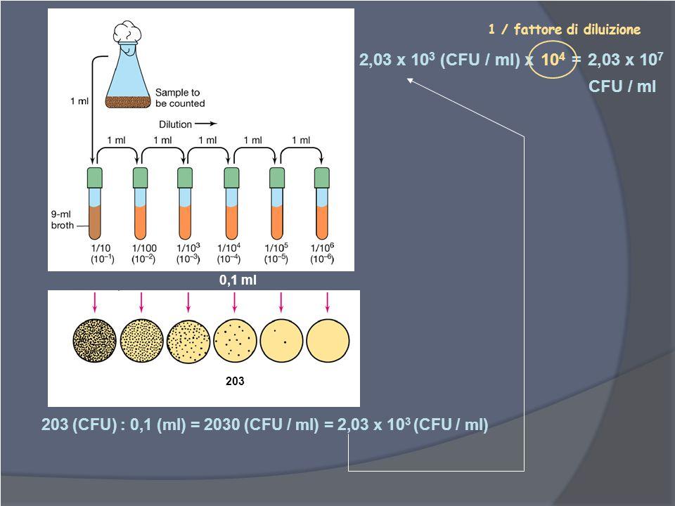 0,1 ml 203 (CFU) : 0,1 (ml) = 2030 (CFU / ml) = 2,03 x 10 3 (CFU / ml) 2,03 x 10 3 (CFU / ml) x = 1 / fattore di diluizione 203 10 4 2,03 x 10 7 CFU /