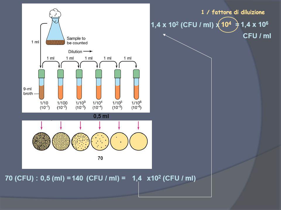 0,5 ml 70 (CFU) : (ml) = (CFU / ml) = x10 2 (CFU / ml) 1,4 x 10 2 (CFU / ml) x = 1 / fattore di diluizione 70 0,5 140 1,4 10 4 1,4 x 10 6 CFU / ml