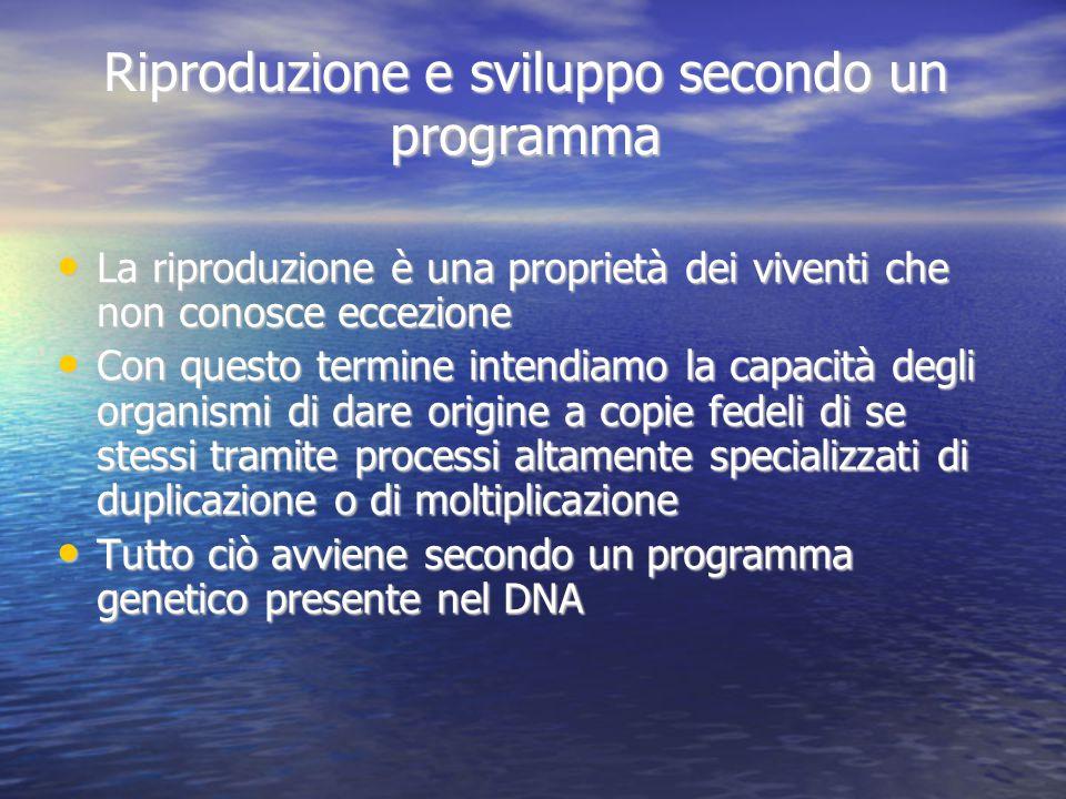 Riproduzione e sviluppo secondo un programma La riproduzione è una proprietà dei viventi che non conosce eccezione Con questo termine intendiamo la ca