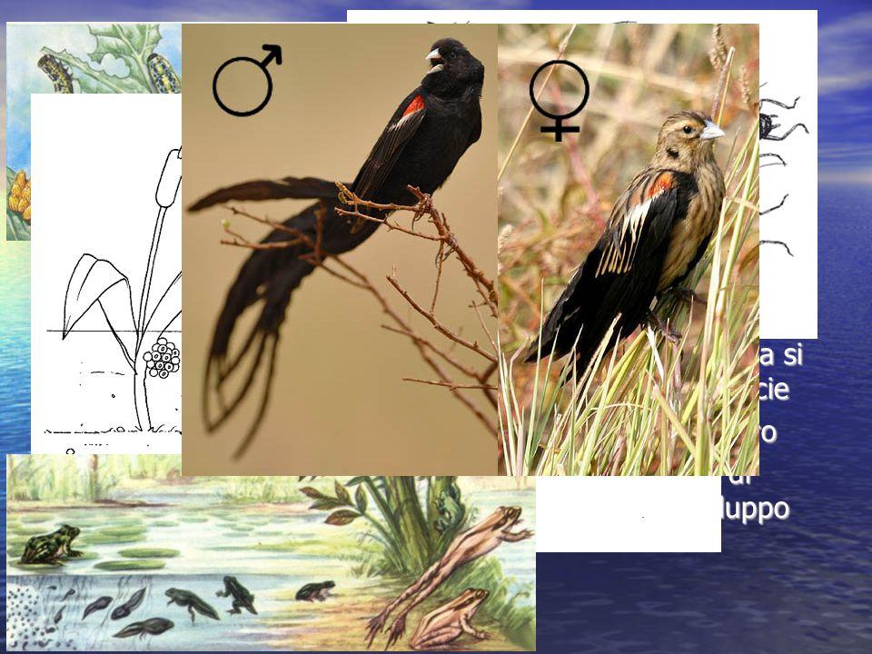 Gli esseri viventi hanno una forma caratteristica Noi classifichiamo gli organismi in specie in base alla loro forma Tale forma è dipende dello stato