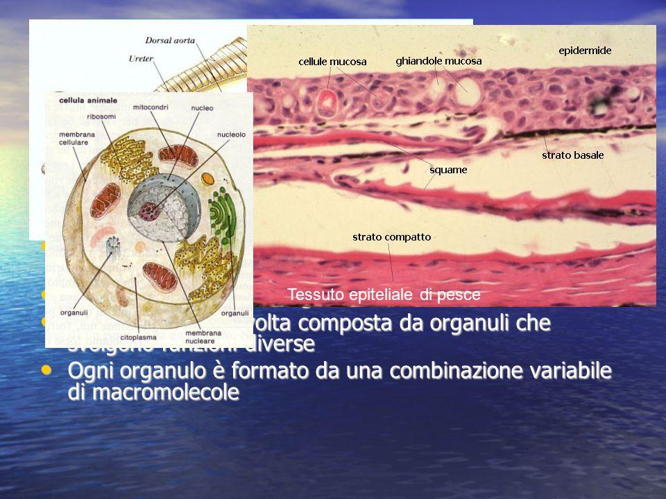 L'organizzazione a livello di organismo Prendiamo un pesce e esso contiene parti anatomiche ben individuabili: organi (es. il cuore, le branchie), app