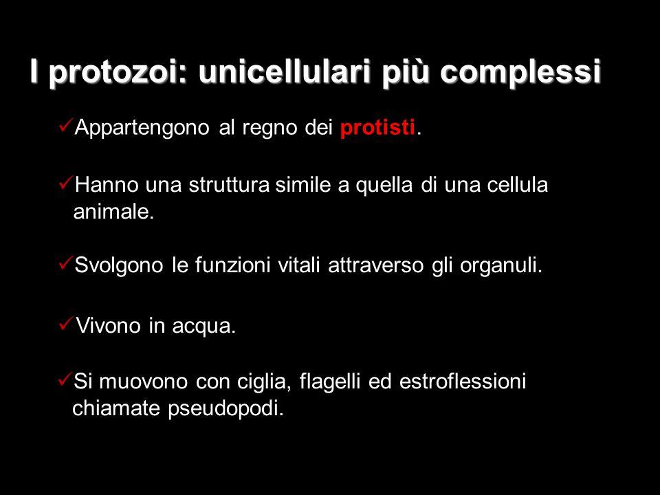 I protozoi: unicellulari più complessi Appartengono al regno dei protisti. Hanno una struttura simile a quella di una cellula animale. Vivono in acqua