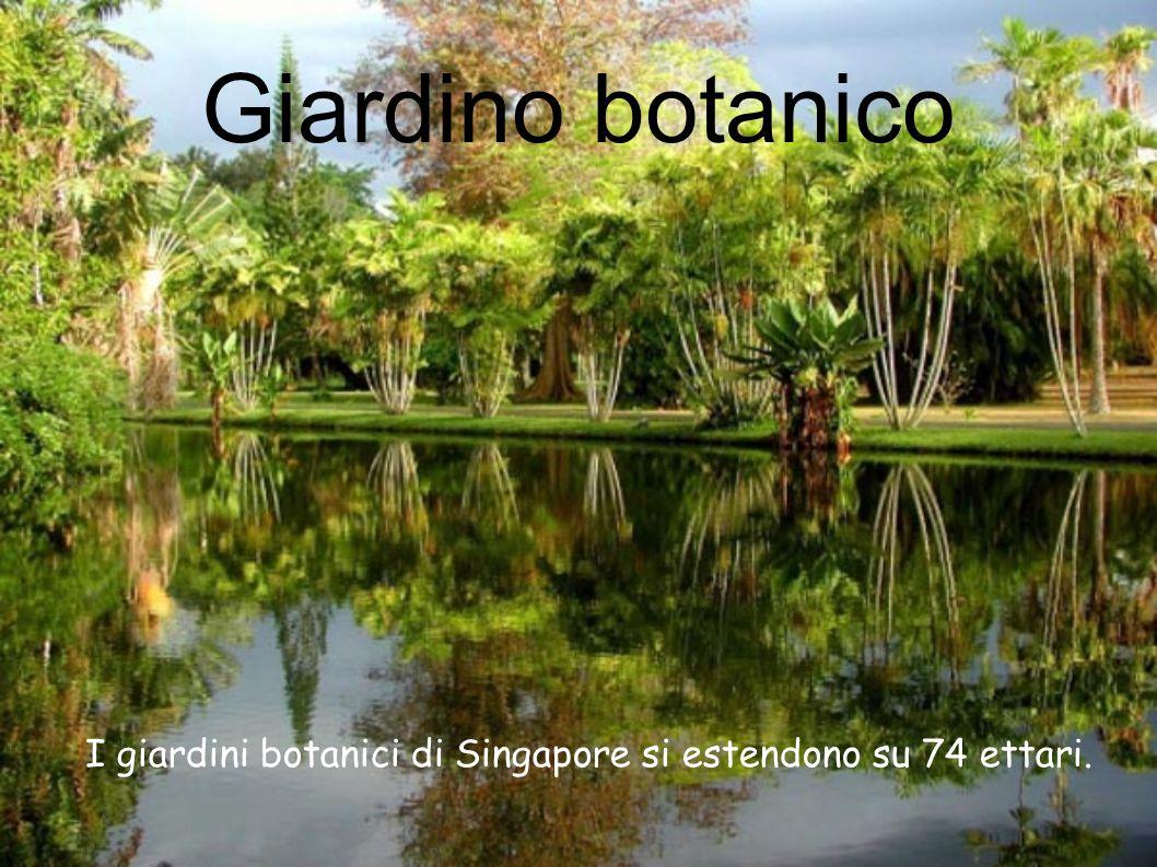 Giardino botanico I giardini botanici di Singapore si estendono su 74 ettari.