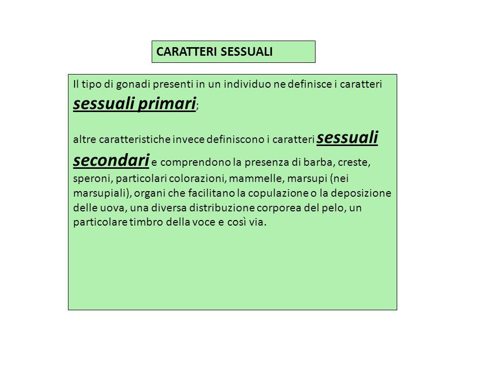 CARATTERI SESSUALI Il tipo di gonadi presenti in un individuo ne definisce i caratteri sessuali primari ; altre caratteristiche invece definiscono i c
