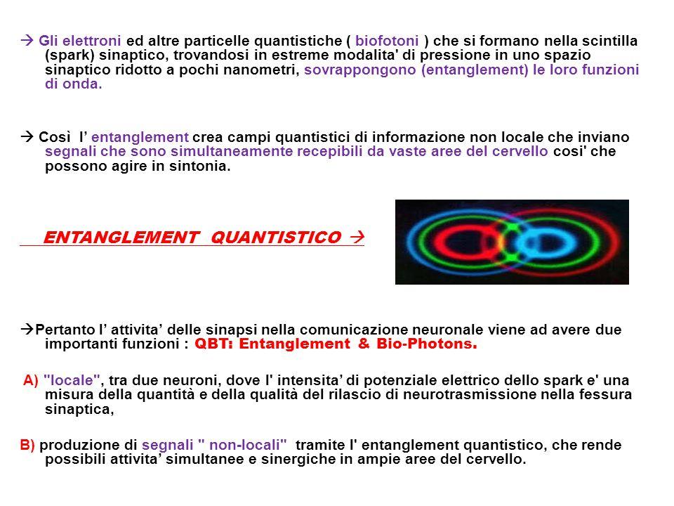  Gli elettroni ed altre particelle quantistiche ( biofotoni ) che si formano nella scintilla (spark) sinaptico, trovandosi in estreme modalita' di pr