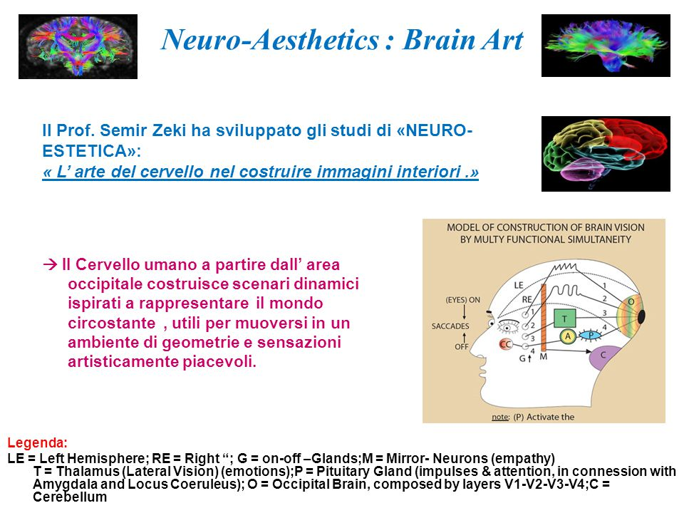 "Neuro-Aesthetics : Brain Art Legenda: LE = Left Hemisphere; RE = Right ""; G = on-off –Glands;M = Mirror- Neurons (empathy) T = Thalamus (Lateral Visio"