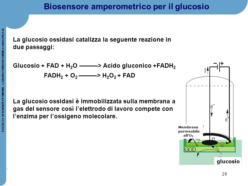 28 FACOLTA' DI SCIENZE FF MM NN – LABORATORIO DI CHIMICA ANALITICA iii. La glucosio ossidasi catalizza la seguente reazione in due passaggi: Glucosio