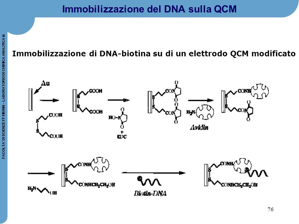 76 FACOLTA' DI SCIENZE FF MM NN – LABORATORIO DI CHIMICA ANALITICA iii Immobilizzazione del DNA sulla QCM Immobilizzazione di DNA-biotina su di un ele