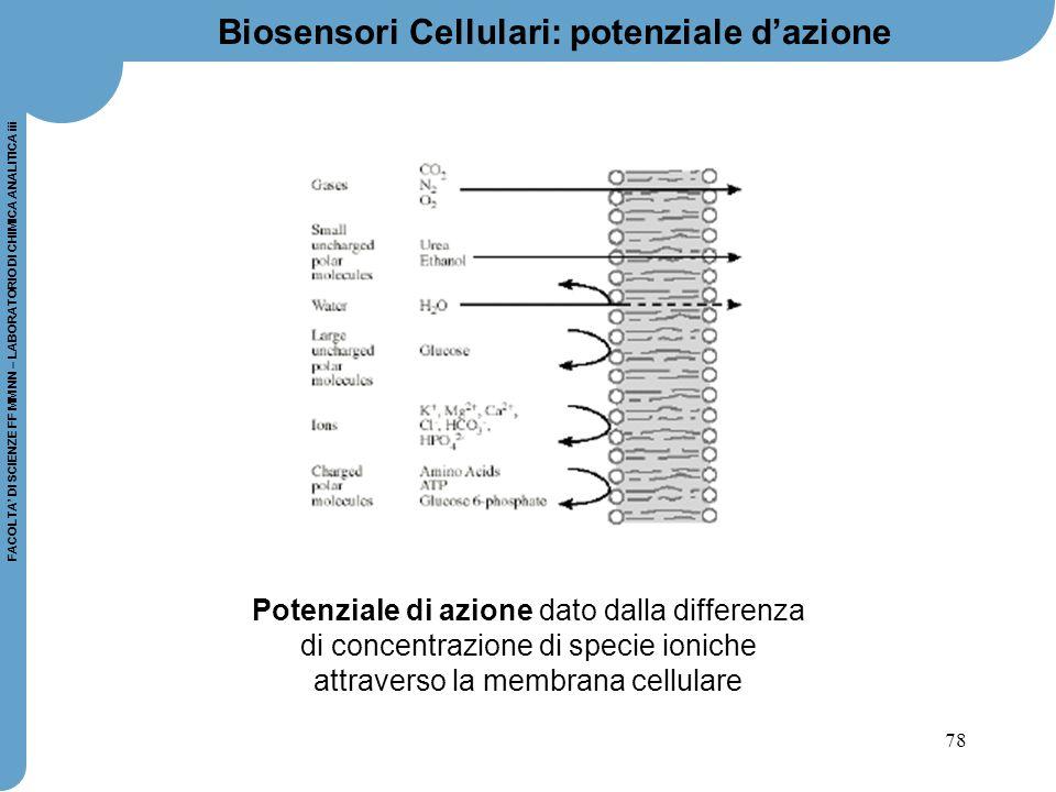 78 FACOLTA' DI SCIENZE FF MM NN – LABORATORIO DI CHIMICA ANALITICA iii Biosensori Cellulari: potenziale d'azione Potenziale di azione dato dalla diffe