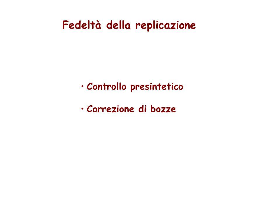 Fedeltà della replicazione Controllo presintetico Correzione di bozze