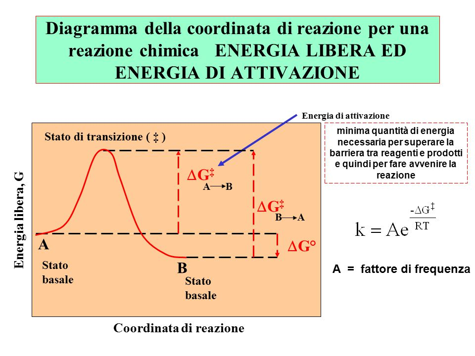 Energia di attivazione reazione diretta razione inversa Stato di transizione ( ‡ ) Gd‡Gd‡ Gi‡Gi‡  G° A B Stato basale Stato basale Energia libera, G Coordinata di reazione A B B A Reazioni favorite e sfavorite ed ENERGIA DI ATTIVAZIONE