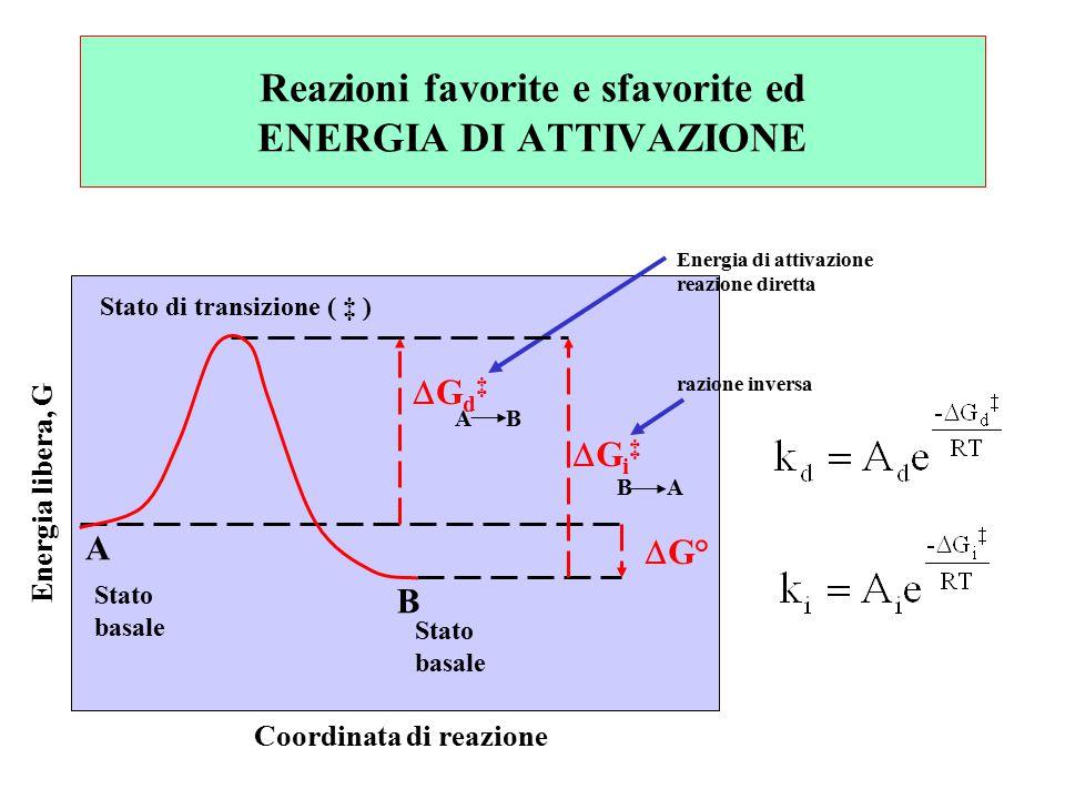 Energia di attivazione reazione diretta razione inversa Stato di transizione ( ‡ ) Gd‡Gd‡ Gi‡Gi‡  G° A B Stato basale Stato basale Energia libera