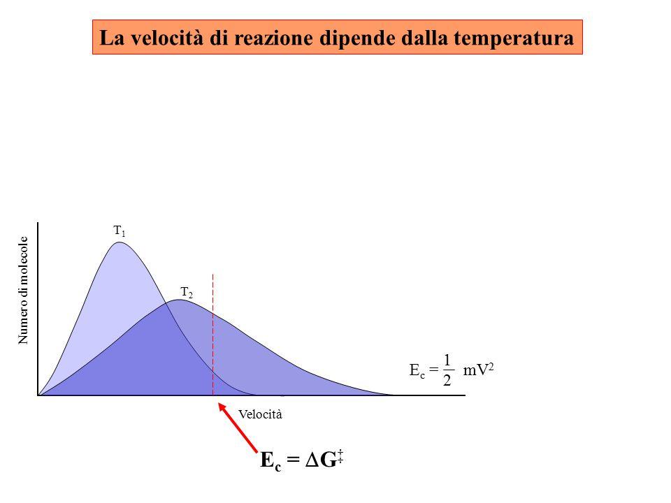1 E c = mV 2 2 T2T2 T1T1 Velocità Numero di molecole La velocità di reazione dipende dalla temperatura E c =  G ‡