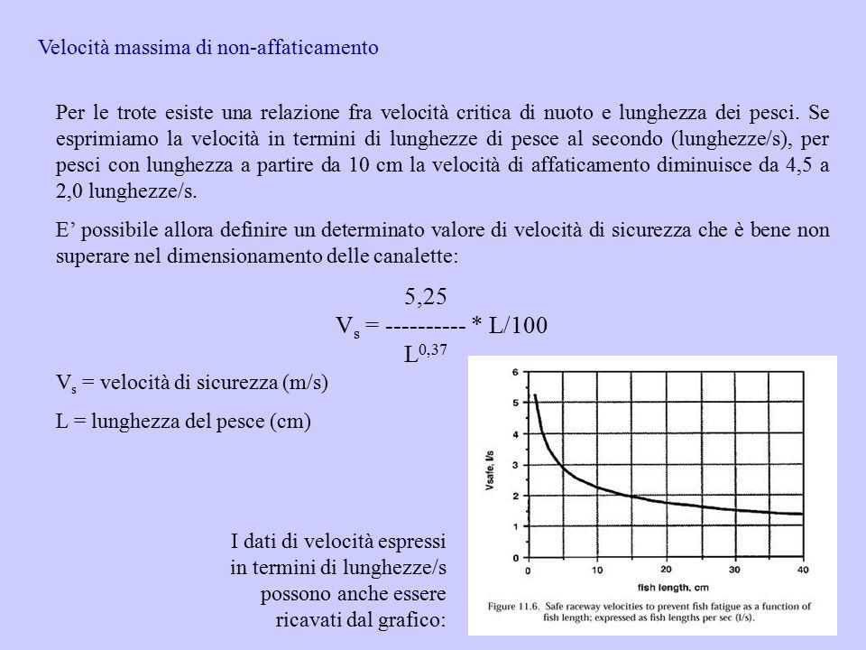Velocità massima di non-affaticamento Per le trote esiste una relazione fra velocità critica di nuoto e lunghezza dei pesci. Se esprimiamo la velocità