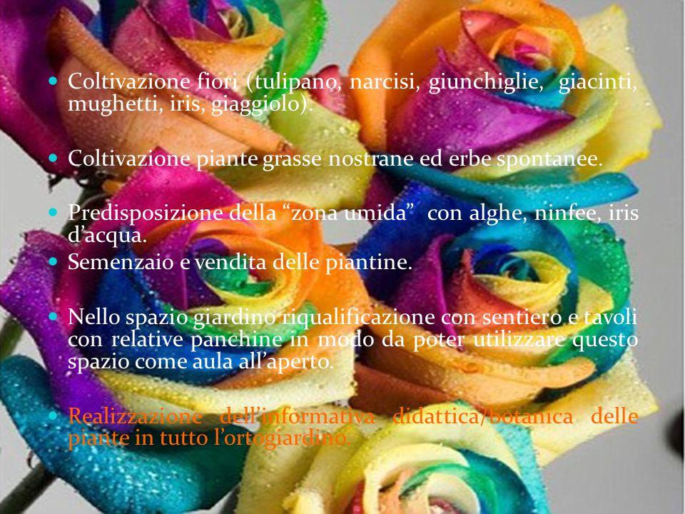 Coltivazione fiori (tulipano, narcisi, giunchiglie, giacinti, mughetti, iris, giaggiolo).