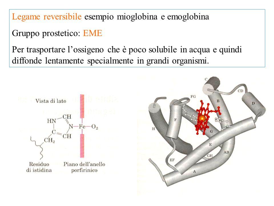 Legame reversibile esempio mioglobina e emoglobina Gruppo prostetico: EME Per trasportare l'ossigeno che è poco solubile in acqua e quindi diffonde le