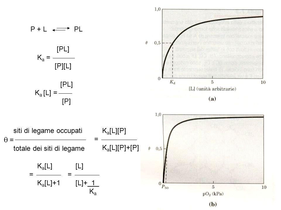 P + L PL [PL] K a = [P][L] [PL] K a [L] = [P] siti di legame occupati   = totale dei siti di legame K a [L][P]  = K a [L][P]+[P] K a [L]  = K a [L