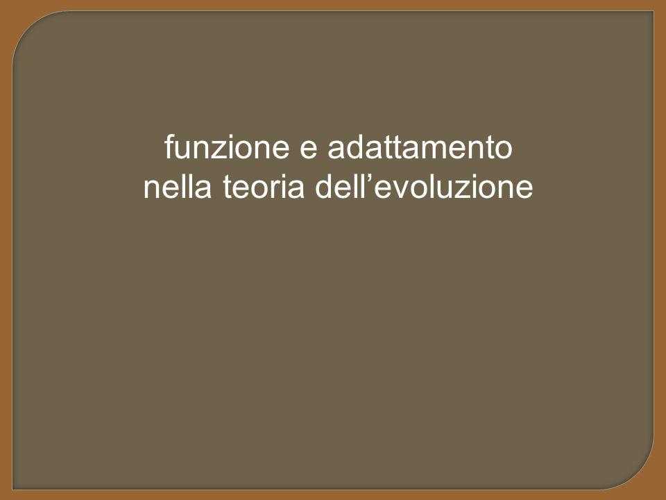 funzione e adattamento nella teoria dell'evoluzione