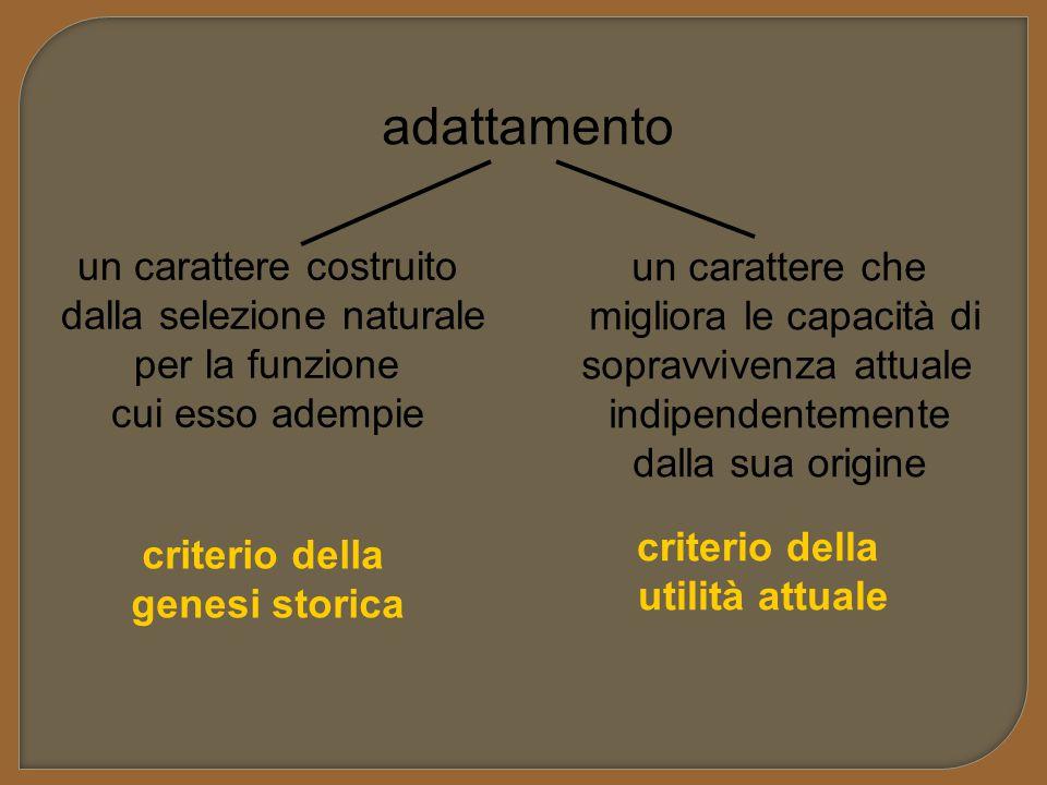 adattamento un carattere costruito dalla selezione naturale per la funzione cui esso adempie un carattere che migliora le capacità di sopravvivenza at