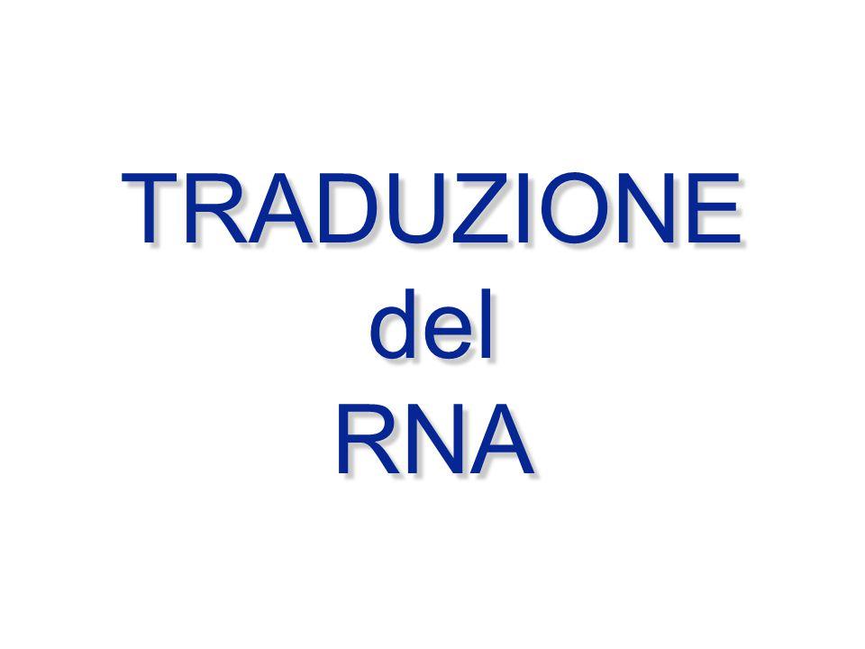 TRADUZIONE del RNA TRADUZIONE del RNA