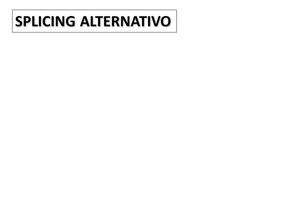 SPLICING ALTERNATIVO