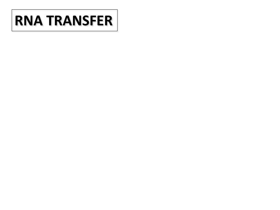 RNA TRANSFER