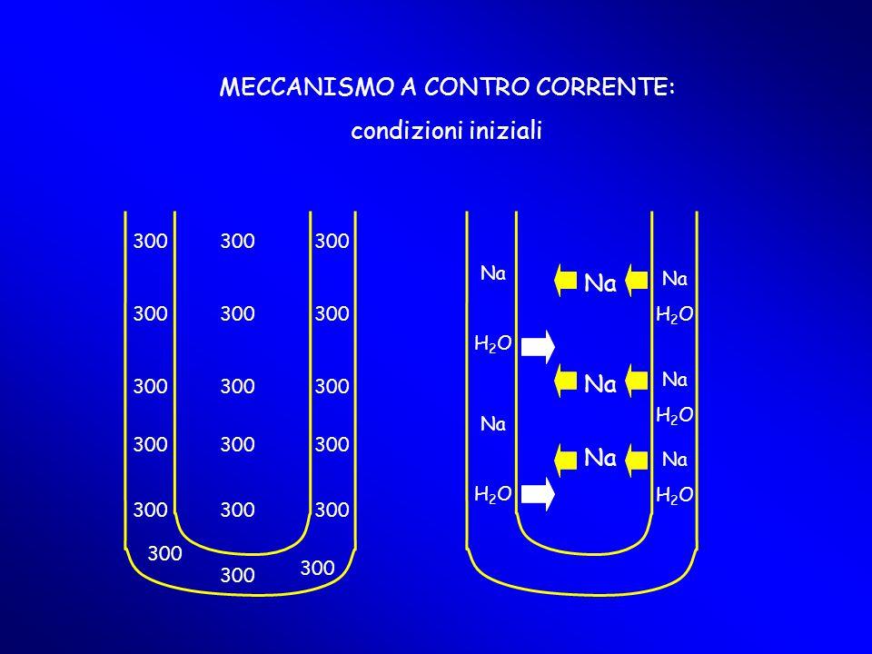 300 Na H 2 O Na H 2 O Na H 2 O Na H 2 O Na H 2 O Na MECCANISMO A CONTRO CORRENTE: condizioni iniziali